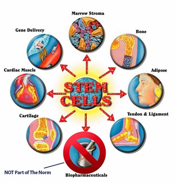 Stem_Cells_Pic2