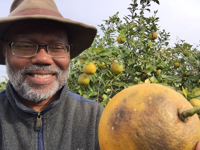 grapefruit_2