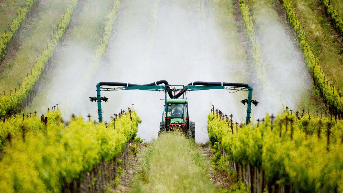 sprayinggrapes-spencer_grant
