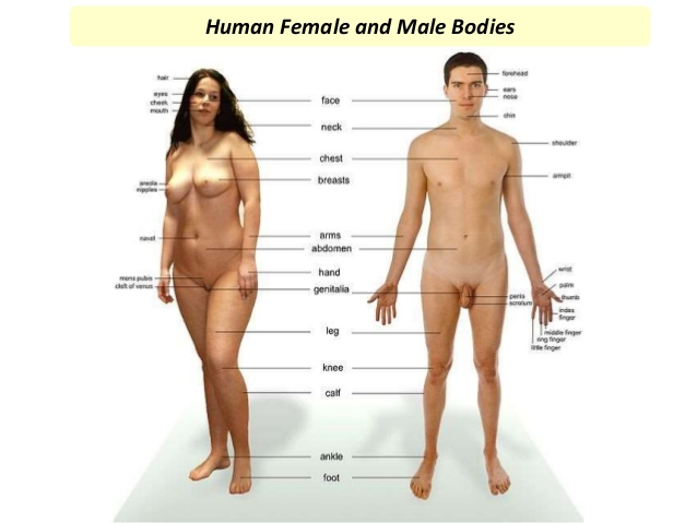 the-human-body-system-3-638